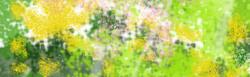 Midori_2