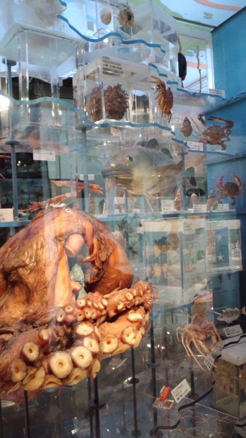 花より科学博物館